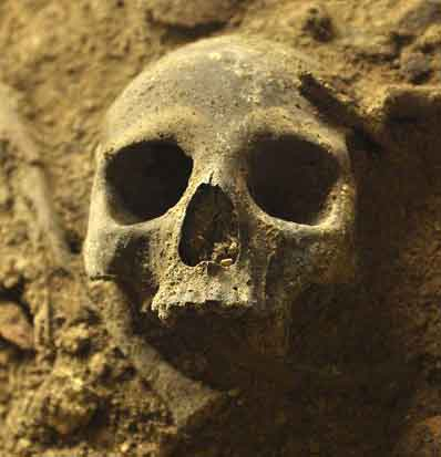 Gut erhaltener Schädel in der neu entdeckten südlichen Kammer