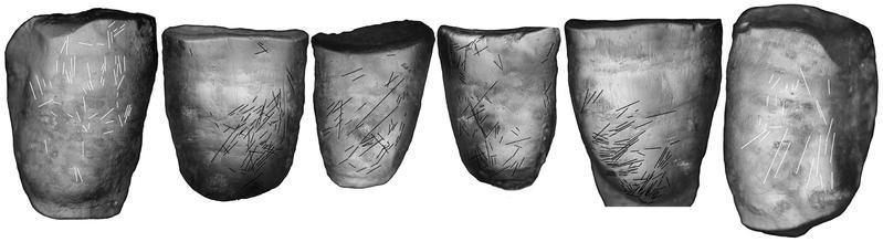 Die Zähne zeigen Kratzspuren, die auf eine Rechtshändigkeit hinweisen. (© Senckenberg)