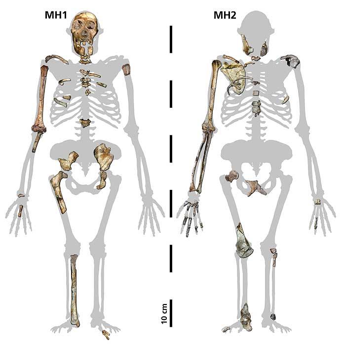 Die beiden Teilskelette (MH1 und MH2) der neuen Hominidenart (© Uni Zürich)