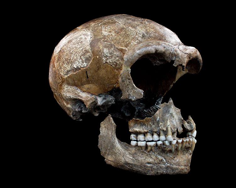 Neandertalerschädel