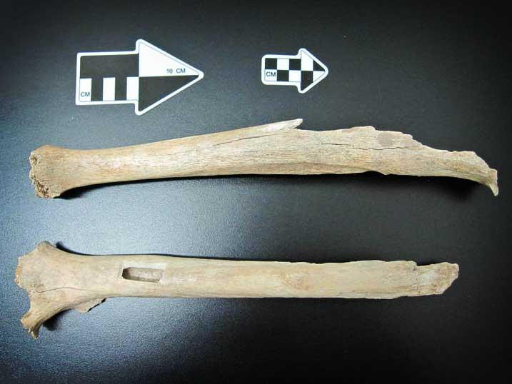 Beinknochen aus Tianyuan