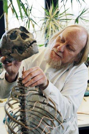 """Präparator Werner Beckmann bereitet das Skelett des weltweit bekannten """"Turkana Boy"""" für die Ausstellung vor. (Foto: LWL/Oblonczyk)"""