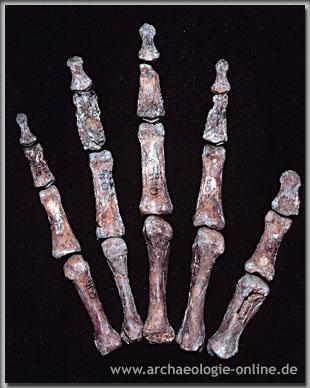 Knochen der rechten Hand von Qafzeh 9
