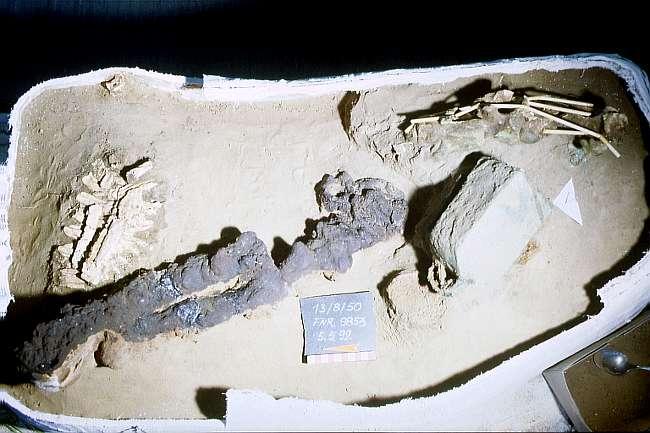Reste von Kopf- und Schulterbereich eines Maultieres mit Teilen seiner Anschirrung; der Befund wurde im Block geborgen. (© Varusschlacht im Osnabrücker Land GmbH – Museum und Park Kalkriese: Grabungsteam)