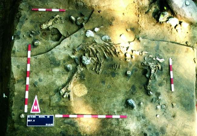 Unter Versturz der Rasensodenmauer blieb ein Maultierskelett fast komplett erhalten. (© Varusschlacht im Osnabrücker Land GmbH – Museum und Park Kalkriese: Grabungsteam)